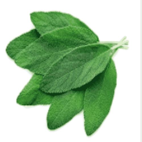 Schafmilchseife Kräuter-Salbei Ovis 100 g-Blätter