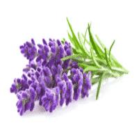 Badezusatz Schafmilch Badeherzen Lavendel Blume 2