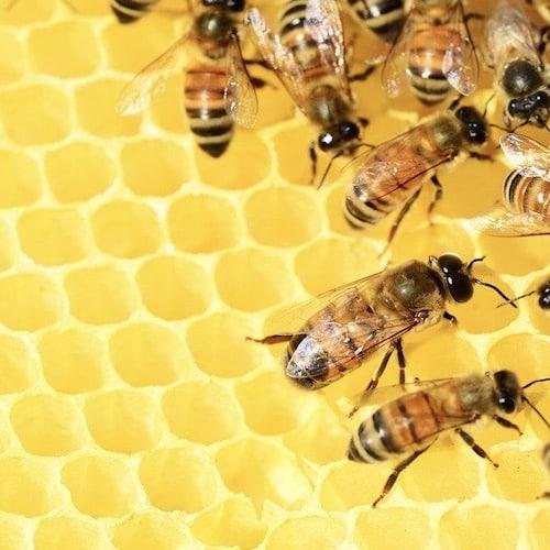 Schafmilchseife mit Wabe und Biene Florex Propolis