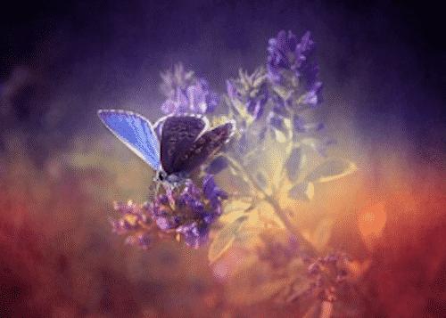 Badesalz mit Lavendelblüten - Blume