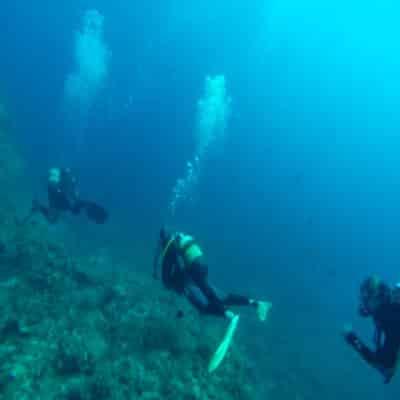 Meeresschwamm von Tauchern