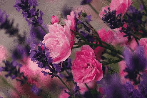 Bio Seife Blütenzauber mit Rose & Lavendel - Blumen