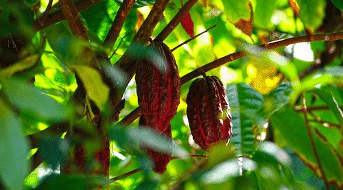 Bio Seife Ahoi mit Kakaobutter & Kokosöl - Kakao