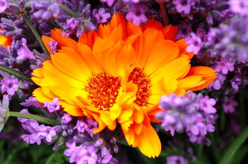 Bio Seife Sommerblühen mit Lavendel & Ringelblume - Blumen