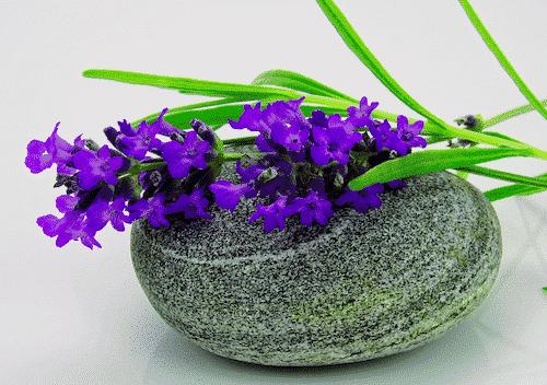 Bio Seife CIDO mit Lavendel & Citrus - Lavendel