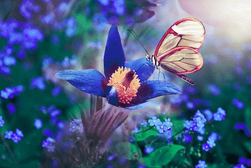 Badesalz mit Wiesenduft - Schmetterling