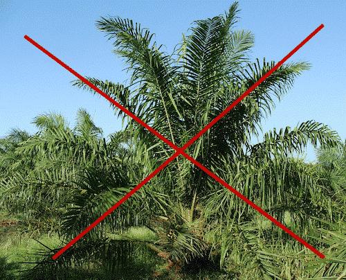 Seife ohne Palmöl - Palmölfreie Seife