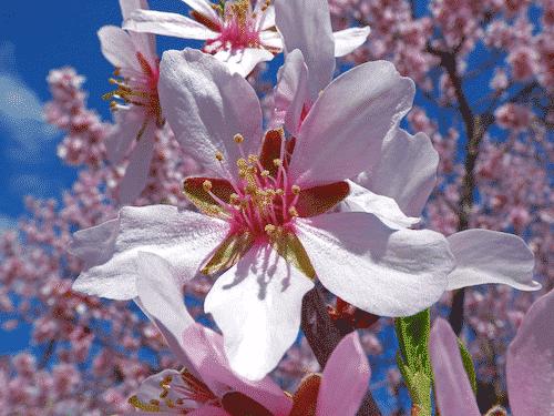 Bio Seife Sommerwiese - Mandelblüte
