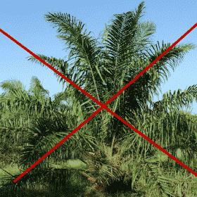 Seife ohne Palmöl - Najel