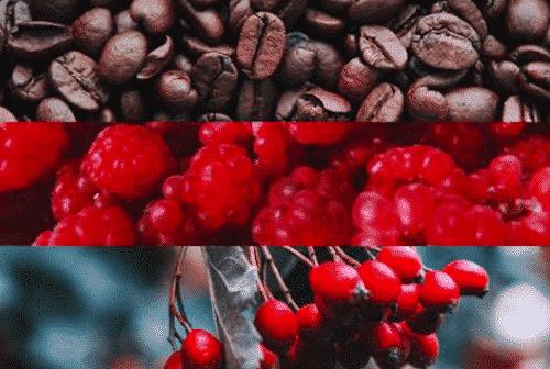 Pflanzliches Gesichts - Serum mit Kaffeeöl - Bild 4