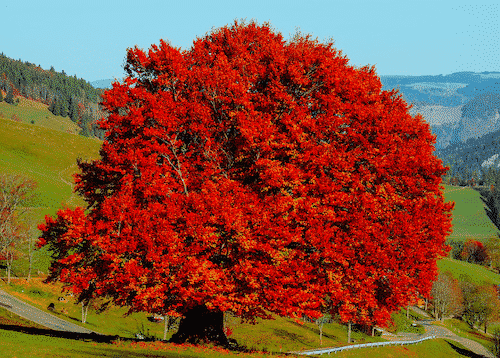 Handschmeichler Baum des Lebens - unverpackt - Buche