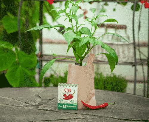 Minigarten Chili - Fireflame - Die Stadtgärtner