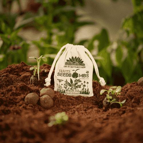 Minigarten Physalis - Die Stadtgärtner 5
