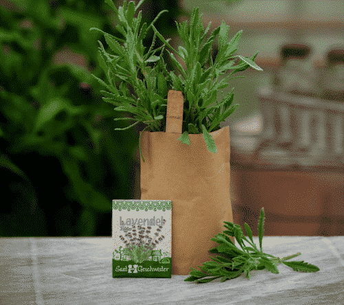 Minigarten Lavendel - Die Stadtgärtner