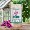 Minigarten Stockrose - Die Stadtgärtner