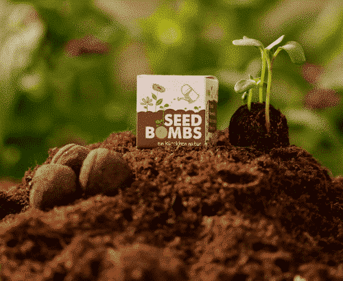 Samenbombe - Wildblumen - Die Stadtgärtner 1