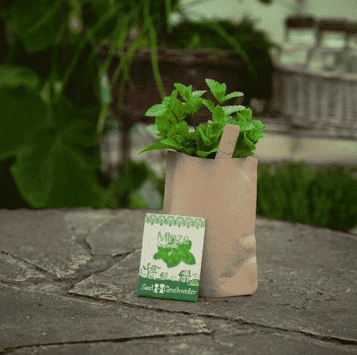 Garten Minze - Die Stadtgärtner