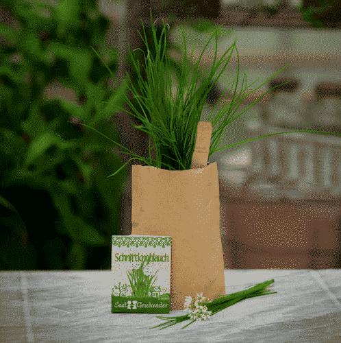 Garten Schnittknoblauch - Die Stadtgärtner