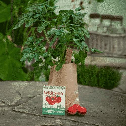Minigarten Wildtomate - rote Murmeln - Die Stadtgärtner
