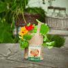 Minigarten Kapuzinerkrese - Die Stadtgärtner