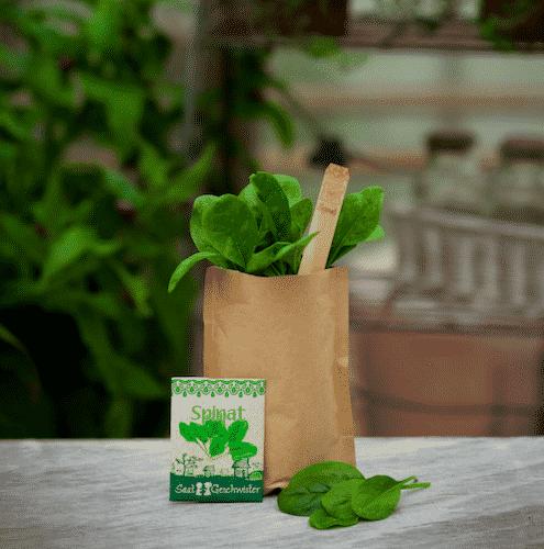 Minigarten Spinat