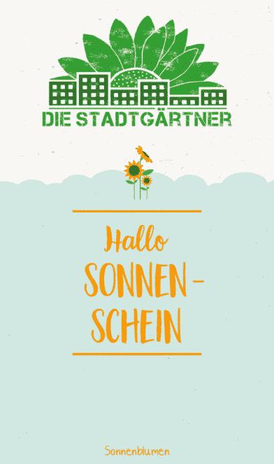 """Saatgruß """"Sonnenschein"""" - Sonnenblumen Saatgut - Die Stadtgärtner 4"""