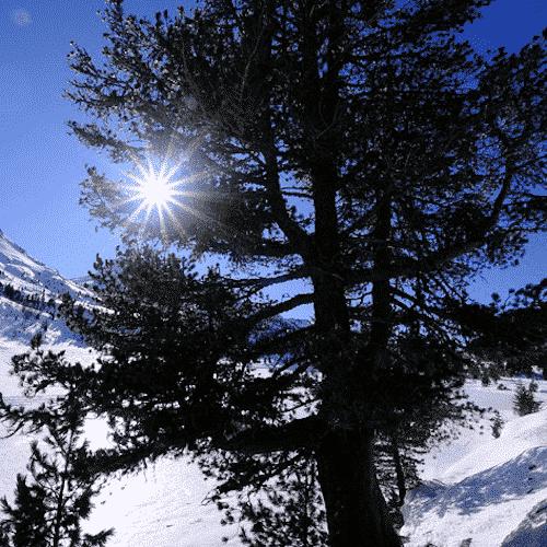 Zirbenholzspäne - Alpenländische Zirbe - Nachfüllpackung