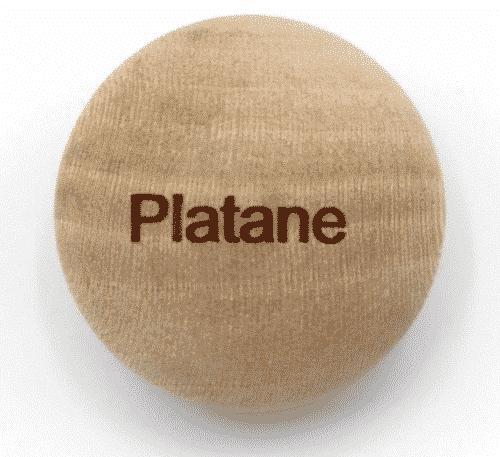 Handschmeichler Platane - Lieblingsbaum - Baumstark Initiative
