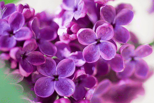 Deo Creme Provence - vegan - Lavendel