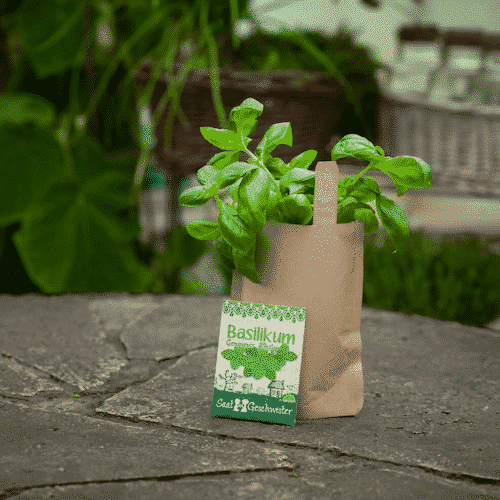 Minigarten Basilikum - Die Stadtgärtner 1