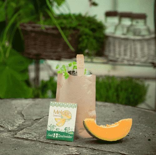 Minigarten Melone - Die Stadtgärtner 1