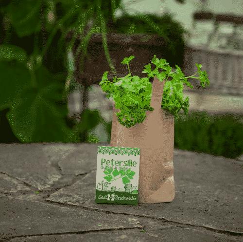 Minigarten Petersilie - Die Stadtgärtner 2