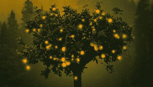 Bio Parfüm für Raum - Orange - Orangen Baum