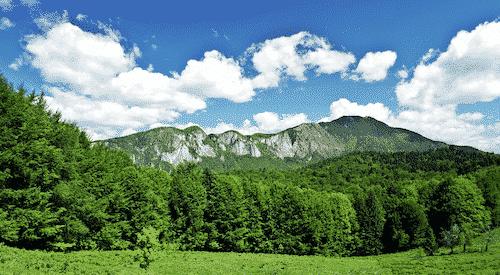 Handschmeichler Tanne - Lieblingsbaum - 1