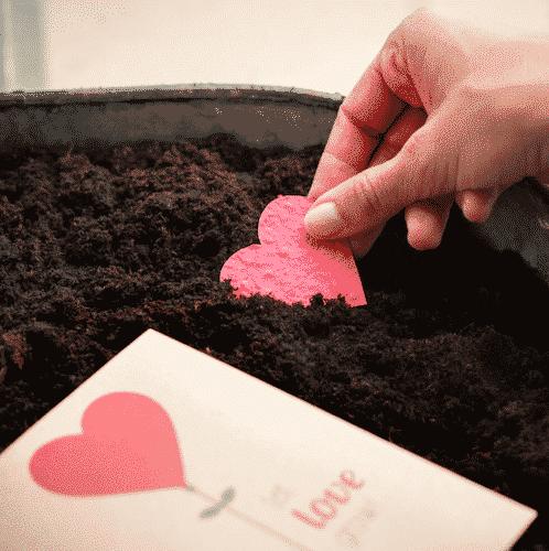Grußkarte Let Love Grow - Die Stadtgärtner 2