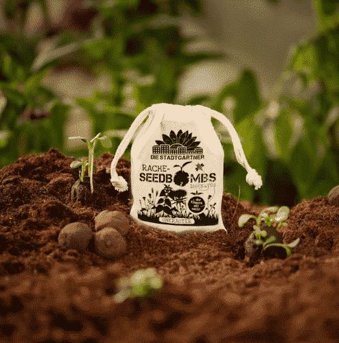 Samenbomben - Unkraut - Die Stadtgärtner
