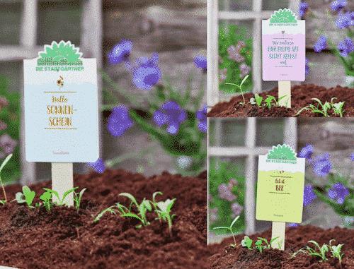 Garten Set VIII - Sonnenblumen & Wildblumen & Bienenweide - Die Stadtgärtner