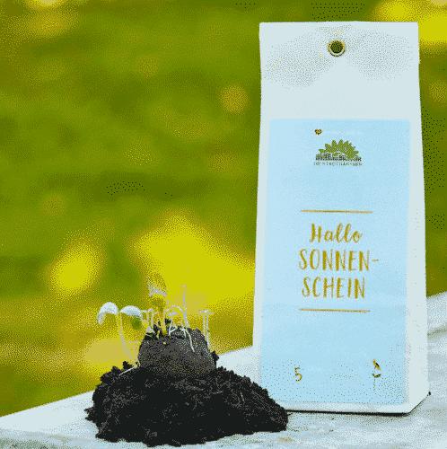 Samenbomben-Hallo-Sonnenschein