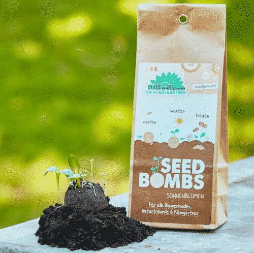 Samenbomben-Sonnenblumen